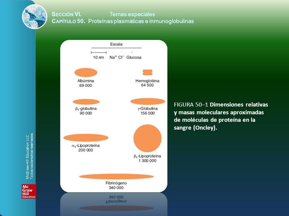 S ECCIÓN VI.Temas especiales C APÍTULO 50. Proteínas plasmáticas e inmunoglobulinas FIGURA 50–1 Dimensiones relativas y masas moleculares aproximadas