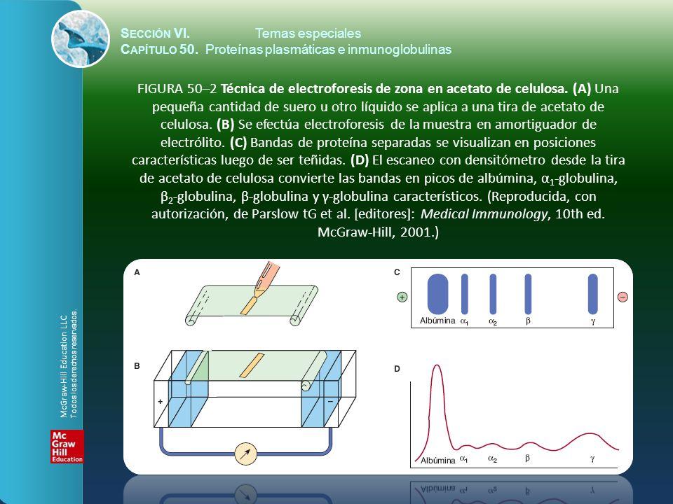 S ECCIÓN VI.Temas especiales C APÍTULO 50. Proteínas plasmáticas e inmunoglobulinas FIGURA 50–2 Técnica de electroforesis de zona en acetato de celulo