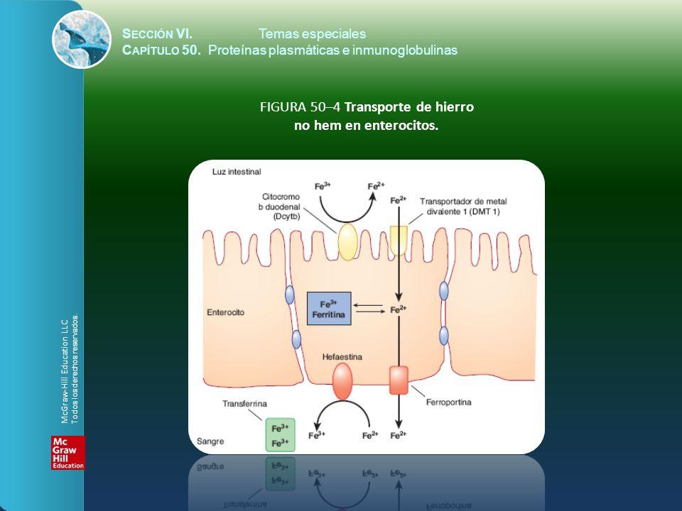 S ECCIÓN VI.Temas especiales C APÍTULO 50. Proteínas plasmáticas e inmunoglobulinas FIGURA 50–4 Transporte de hierro no hem en enterocitos. McGraw-Hil
