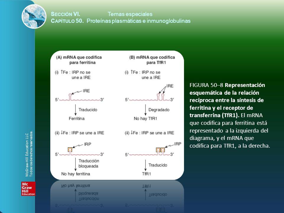 S ECCIÓN VI.Temas especiales C APÍTULO 50. Proteínas plasmáticas e inmunoglobulinas FIGURA 50–8 Representación esquemática de la relación recíproca en