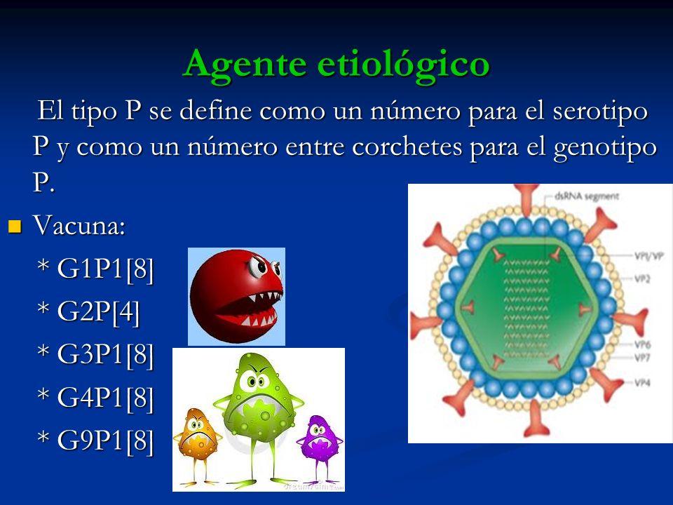 Agente etiológico El tipo P se define como un número para el serotipo P y como un número entre corchetes para el genotipo P. El tipo P se define como