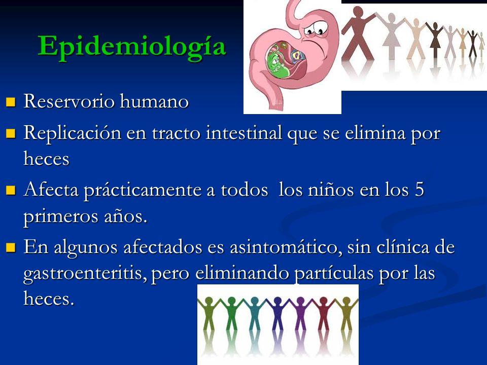 Epidemiología Reservorio humano Reservorio humano Replicación en tracto intestinal que se elimina por heces Replicación en tracto intestinal que se el