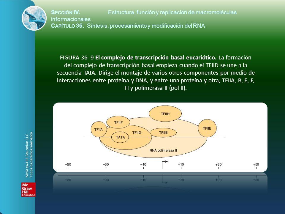 FIGURA 36–9 El complejo de transcripción basal eucariótico. La formación del complejo de transcripción basal empieza cuando el TFIID se une a la secue