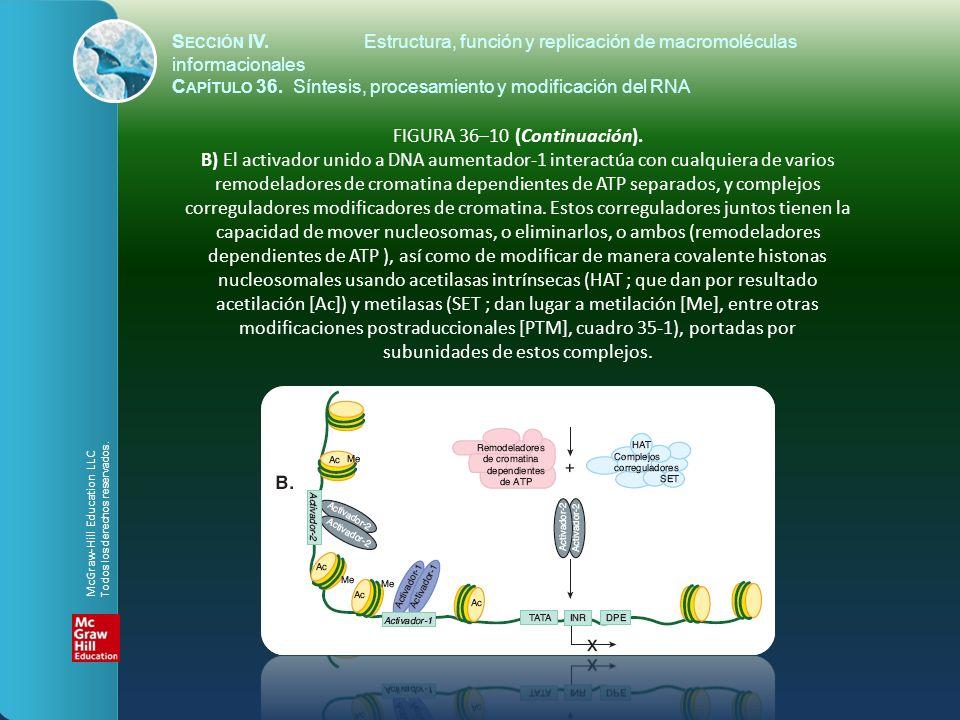 FIGURA 36–10 (Continuación). B) El activador unido a DNA aumentador-1 interactúa con cualquiera de varios remodeladores de cromatina dependientes de A
