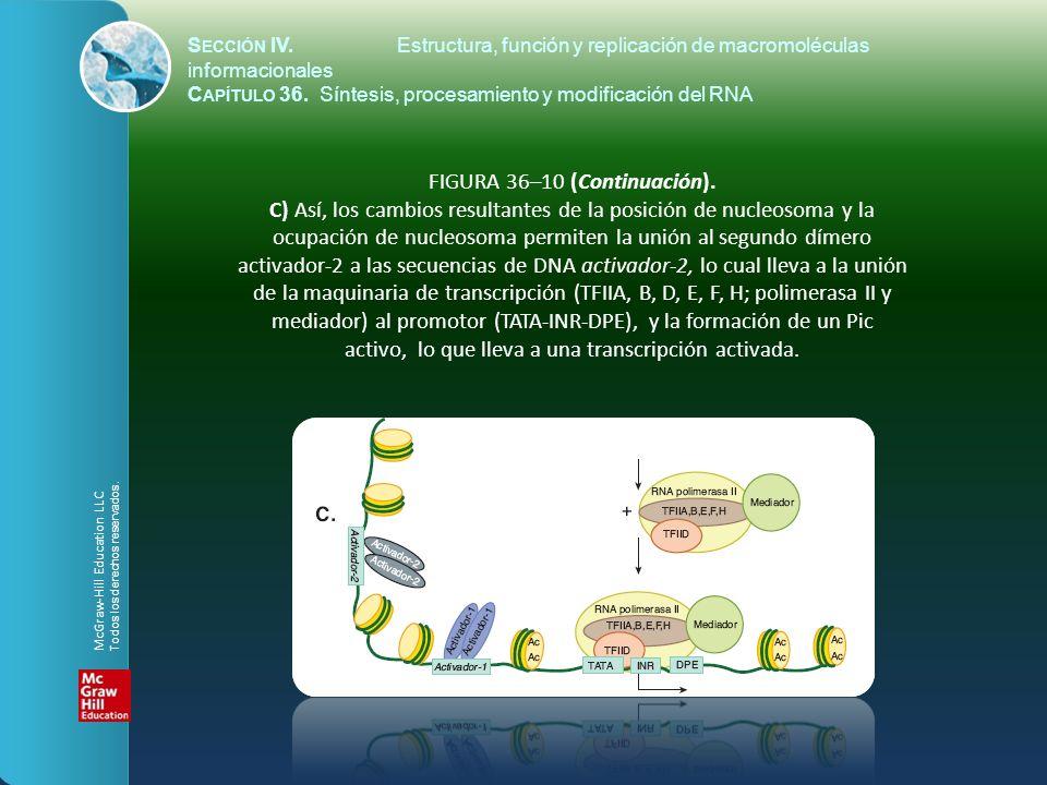 FIGURA 36–10 (Continuación). C) Así, los cambios resultantes de la posición de nucleosoma y la ocupación de nucleosoma permiten la unión al segundo dí