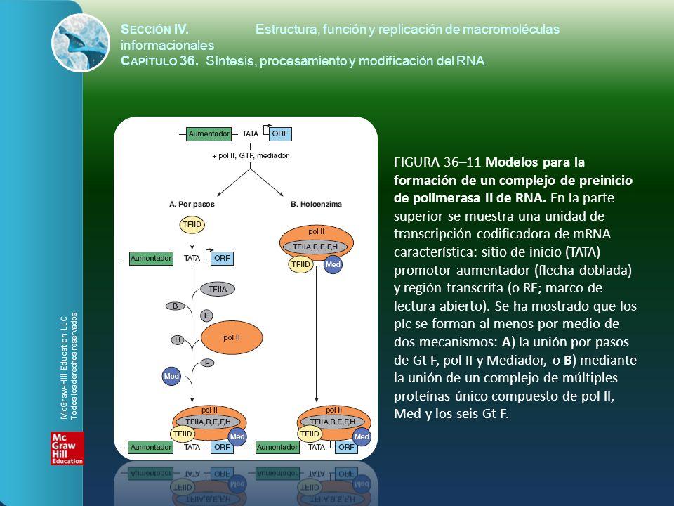 FIGURA 36–11 Modelos para la formación de un complejo de preinicio de polimerasa II de RNA. En la parte superior se muestra una unidad de transcripció