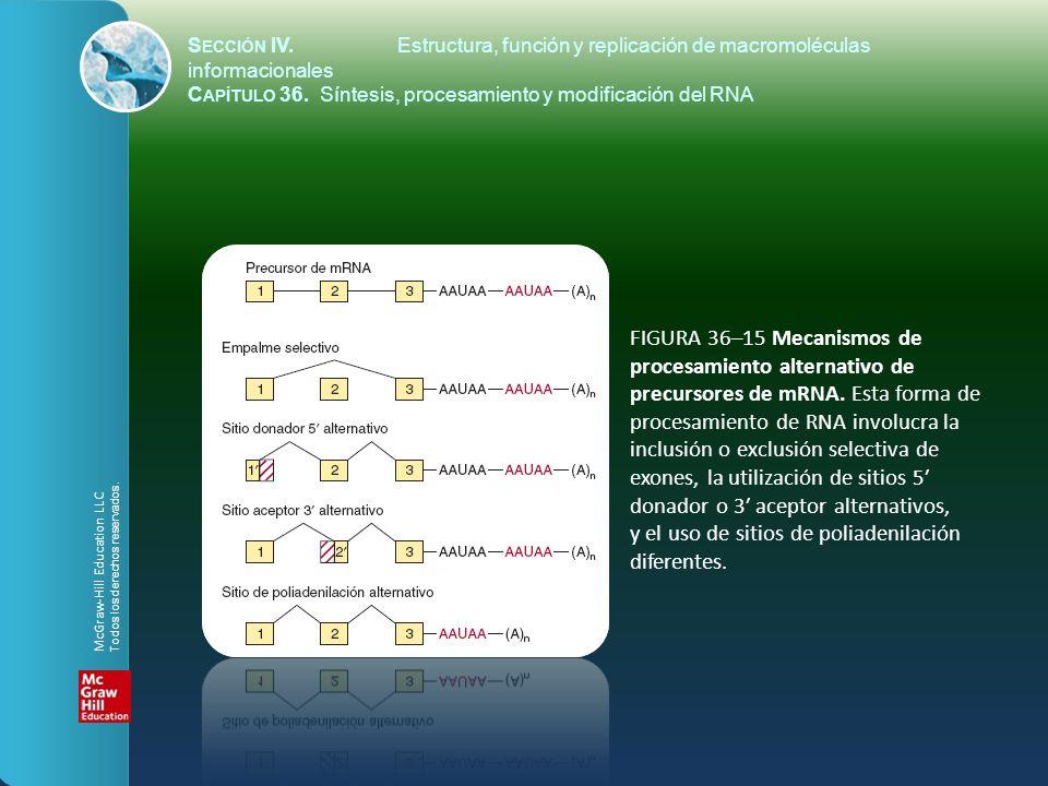 FIGURA 36–15 Mecanismos de procesamiento alternativo de precursores de mRNA. Esta forma de procesamiento de RNA involucra la inclusión o exclusión sel