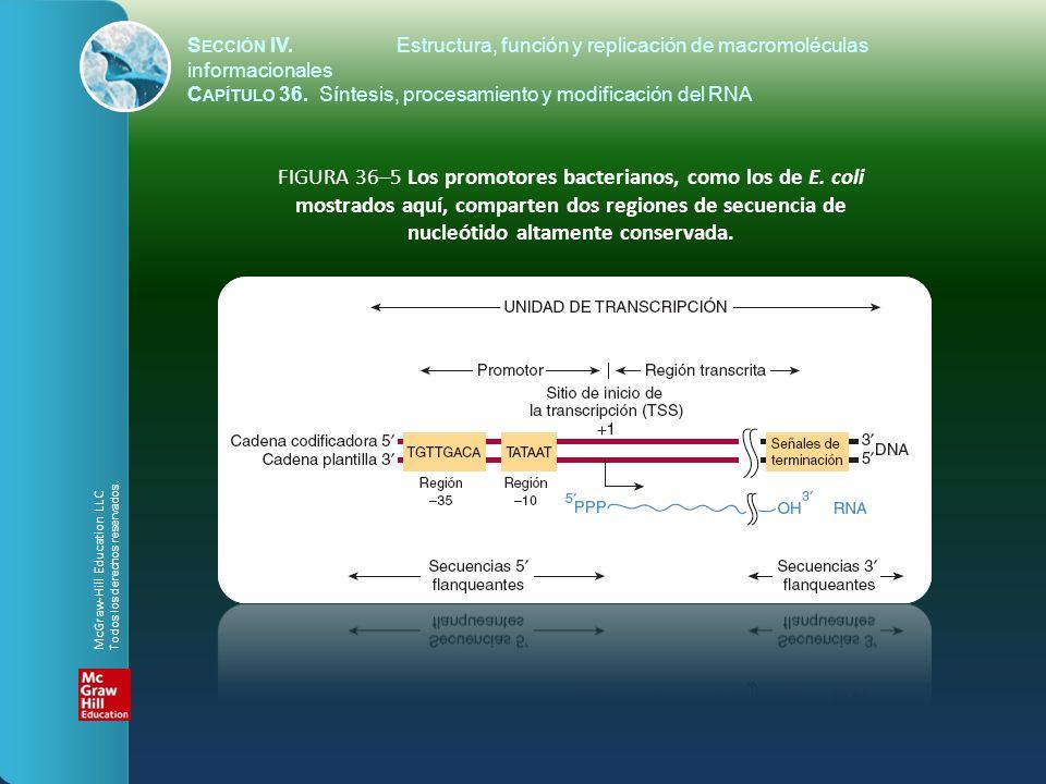 FIGURA 36–5 Los promotores bacterianos, como los de E. coli mostrados aquí, comparten dos regiones de secuencia de nucleótido altamente conservada. S