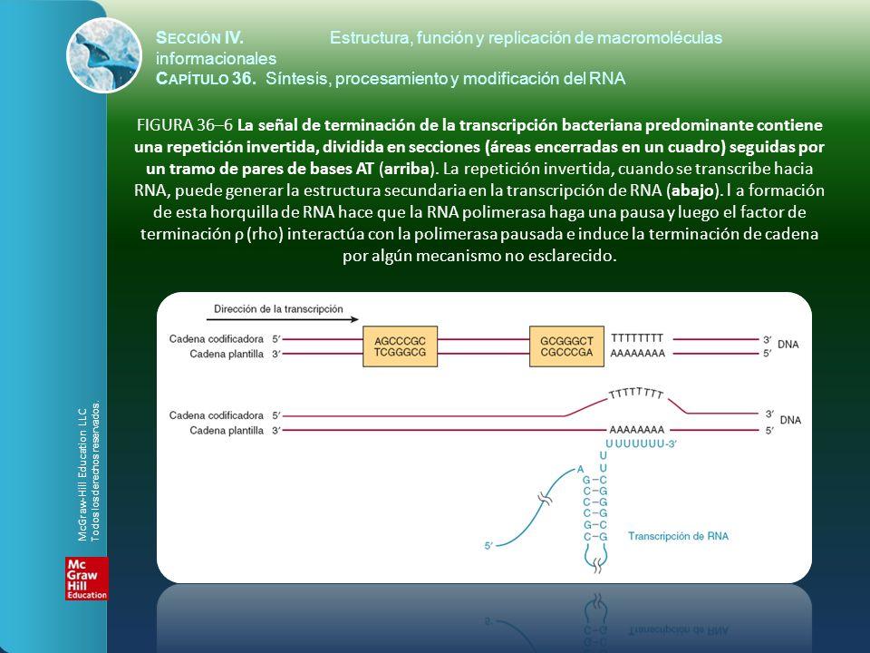 FIGURA 36–6 La señal de terminación de la transcripción bacteriana predominante contiene una repetición invertida, dividida en secciones (áreas encerr