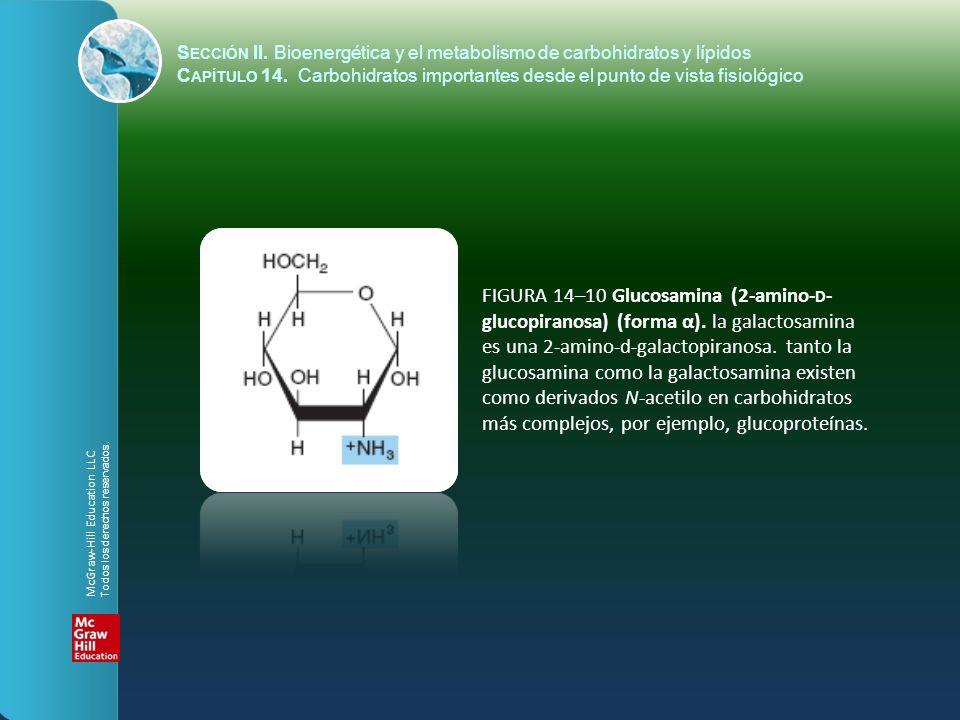 FIGURA 14–10 Glucosamina (2-amino- D - glucopiranosa) (forma α). la galactosamina es una 2-amino-d-galactopiranosa. tanto la glucosamina como la galac