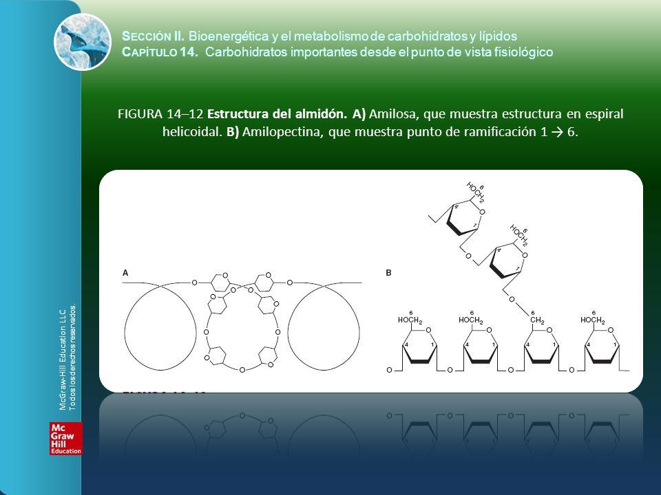 FIGURA 14–12 Estructura del almidón. A) Amilosa, que muestra estructura en espiral helicoidal. B) Amilopectina, que muestra punto de ramificación 1 6.