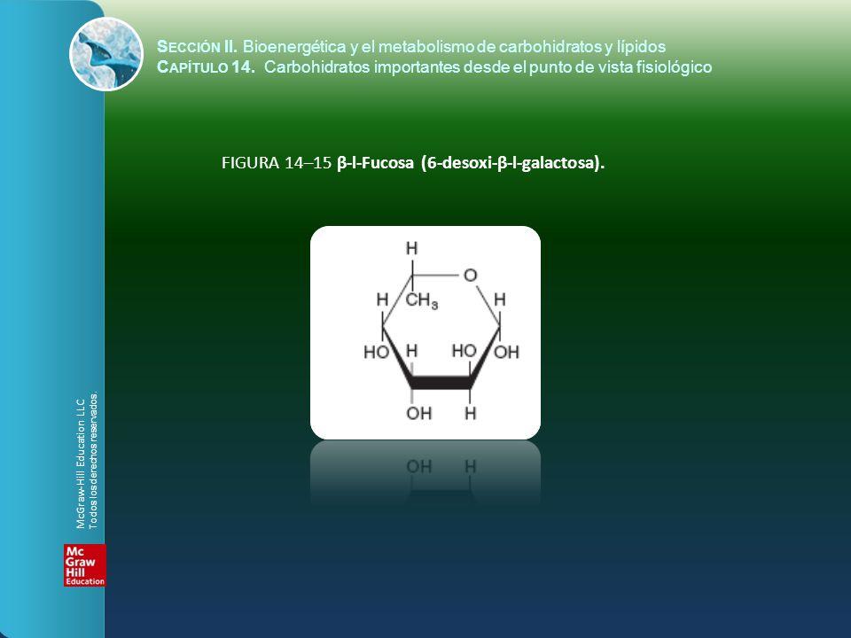 FIGURA 14–15 β-l-Fucosa (6-desoxi-β-l-galactosa). S ECCIÓN II. Bioenergética y el metabolismo de carbohidratos y lípidos C APÍTULO 14. Carbohidratos i