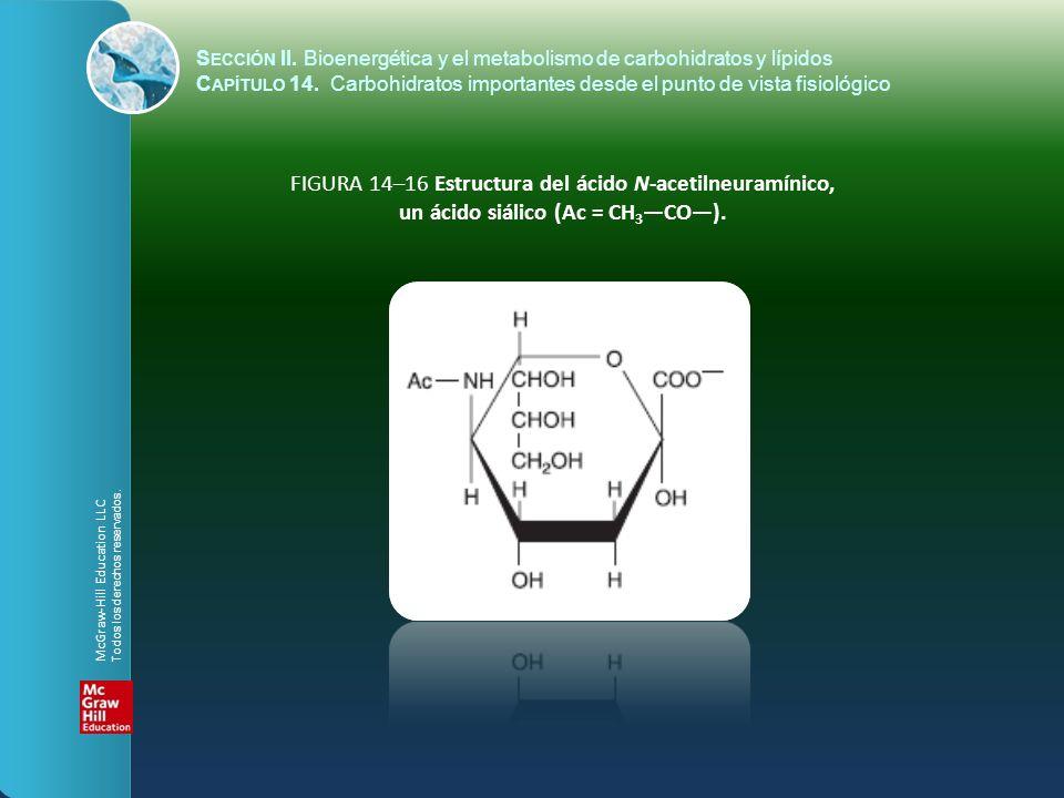 FIGURA 14–16 Estructura del ácido N-acetilneuramínico, un ácido siálico (Ac = CH 3 CO). S ECCIÓN II. Bioenergética y el metabolismo de carbohidratos y