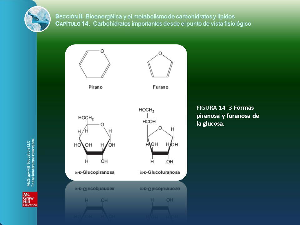 FIGURA 14–3 Formas piranosa y furanosa de la glucosa. S ECCIÓN II. Bioenergética y el metabolismo de carbohidratos y lípidos C APÍTULO 14. Carbohidrat