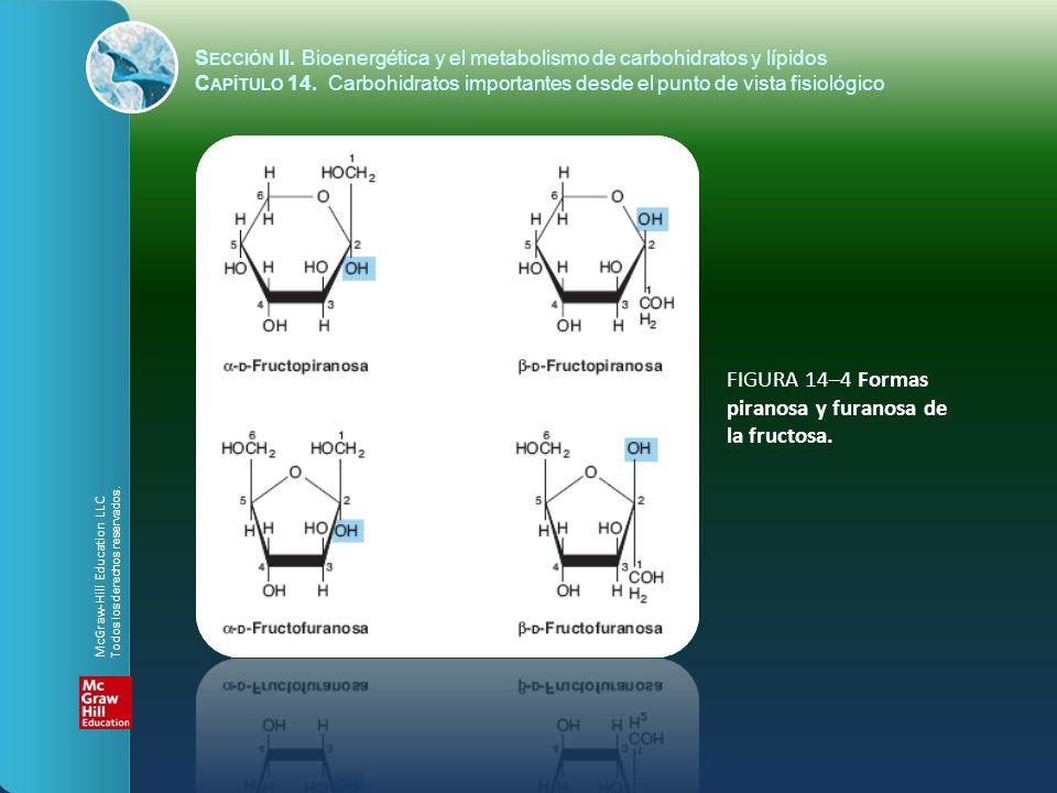 FIGURA 14–4 Formas piranosa y furanosa de la fructosa. S ECCIÓN II. Bioenergética y el metabolismo de carbohidratos y lípidos C APÍTULO 14. Carbohidra