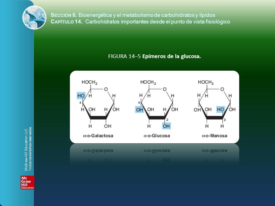 FIGURA 14–5 Epímeros de la glucosa. S ECCIÓN II. Bioenergética y el metabolismo de carbohidratos y lípidos C APÍTULO 14. Carbohidratos importantes des
