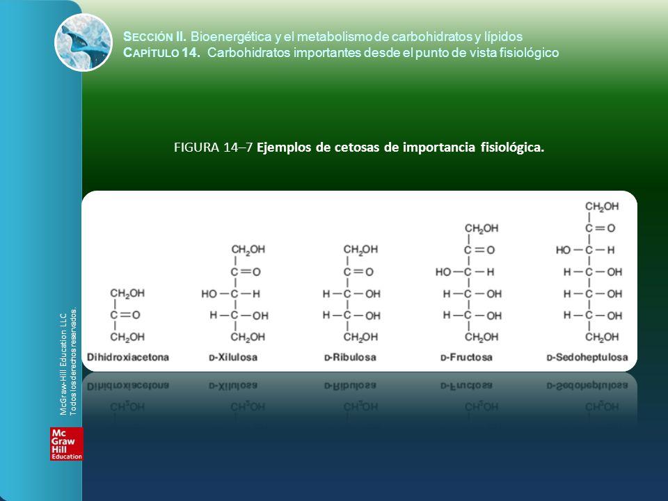 FIGURA 14–7 Ejemplos de cetosas de importancia fisiológica. S ECCIÓN II. Bioenergética y el metabolismo de carbohidratos y lípidos C APÍTULO 14. Carbo
