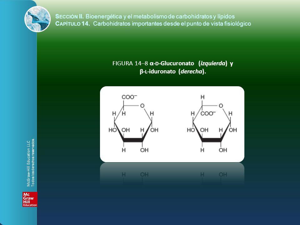 FIGURA 14–8 α- D -Glucuronato (izquierda) y β- L -iduronato (derecha). S ECCIÓN II. Bioenergética y el metabolismo de carbohidratos y lípidos C APÍTUL