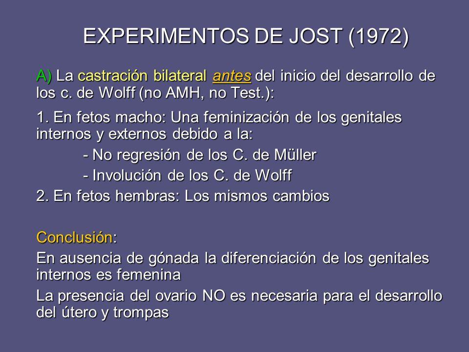 EXPERIMENTOS DE JOST (1972) A) La castración bilateral antes del inicio del desarrollo de los c. de Wolff (no AMH, no Test.): 1. En fetos macho: Una f
