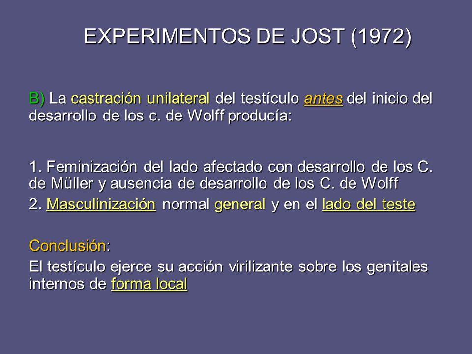 EXPERIMENTOS DE JOST (1972) B) La castración unilateral del testículo antes del inicio del desarrollo de los c. de Wolff producía: 1. Feminización del