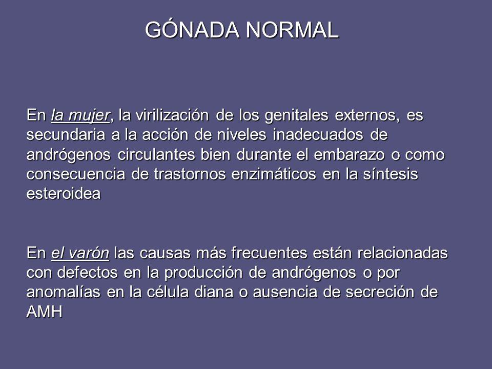 En la mujer, la virilización de los genitales externos, es secundaria a la acción de niveles inadecuados de andrógenos circulantes bien durante el emb