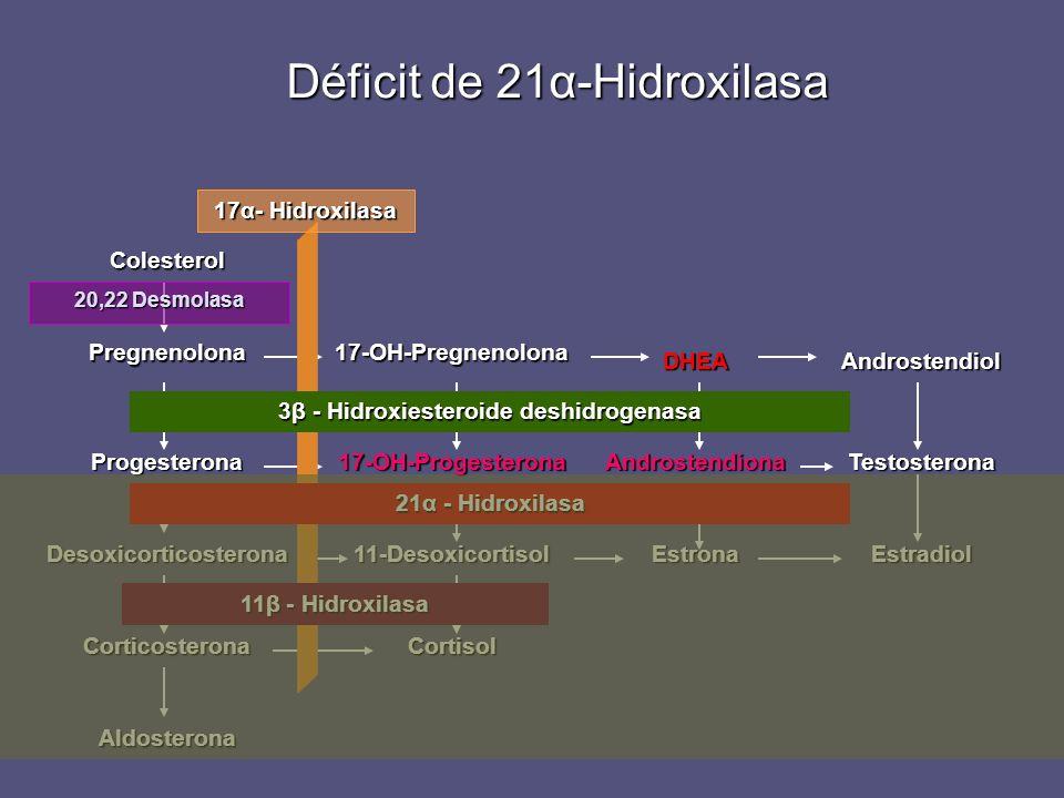 Déficit de 21α-Hidroxilasa Desoxicorticosterona Progesterona Pregnenolona Colesterol Corticosterona Aldosterona 11-Desoxicortisol 17-OH-Progesterona 1