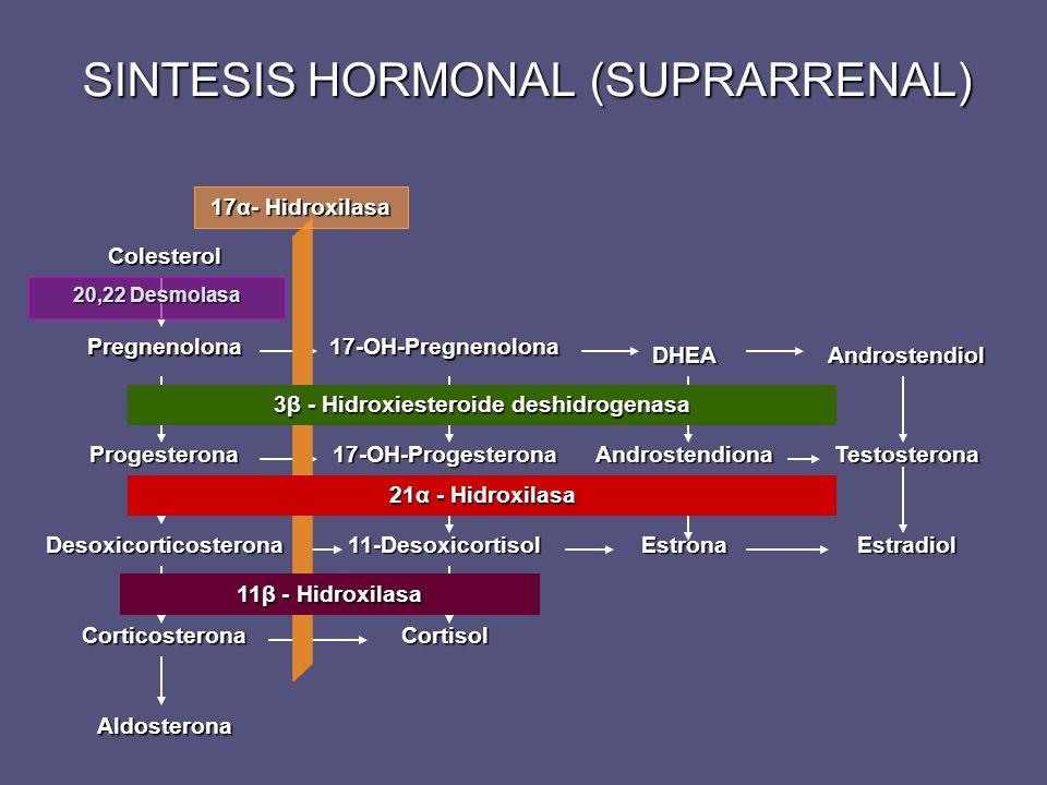 SINTESIS HORMONAL (SUPRARRENAL) Desoxicorticosterona Progesterona Pregnenolona Colesterol Corticosterona Aldosterona 11-Desoxicortisol 17-OH-Progester