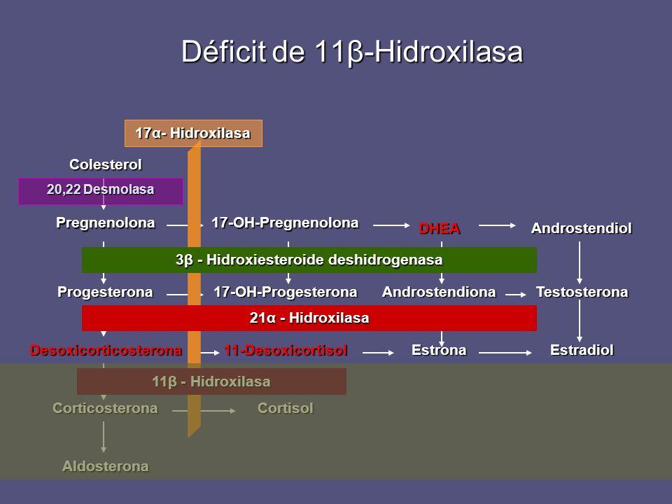 Déficit de 11β-Hidroxilasa Desoxicorticosterona Progesterona Pregnenolona Colesterol Corticosterona Aldosterona 11-Desoxicortisol 17-OH-Progesterona 1