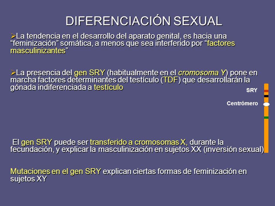 Feminización Testicular Completa o Síndrome de Morris Herencia con carácter recesivo o dominante ligada al cromosoma X Afecta a varios miembros de la familia Cariotipo: 46, XY Gónada = Testículo bien desarrollado (intraabdominal) AMH - Genitales internos: masculinos - Testosterona / DHT normales * - Genitales externos: femeninos * (*) El síndrome se debe a un Defecto en el Receptor de andrógenos que se convierten a estrógenos mujer lampiña pero con MAMAS (en las formas incompletas hay vello y virilización en mayor o menor grado) Tratamiento: Gonadectomía tras la pubertad + THS (estógenos Neovagina Neovagina Pseudohermafroditismo masculino con feminización