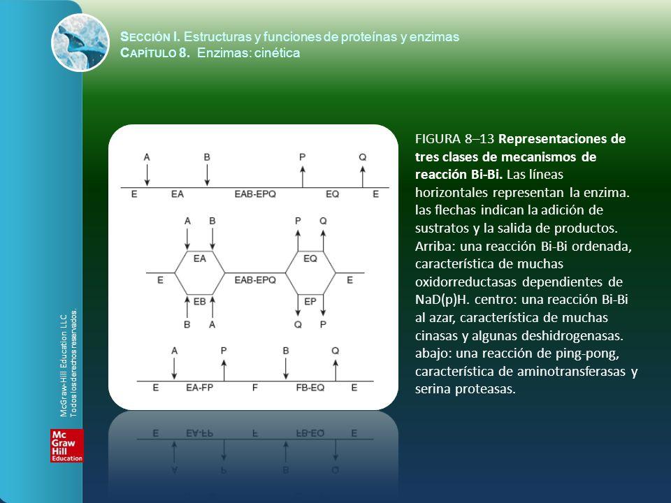 FIGURA 8–13 Representaciones de tres clases de mecanismos de reacción Bi-Bi. Las líneas horizontales representan la enzima. las flechas indican la adi