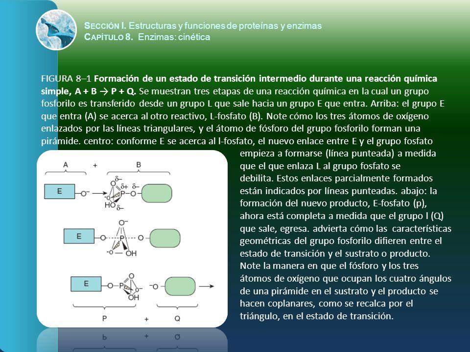 S ECCIÓN I. Estructuras y funciones de proteínas y enzimas C APÍTULO 8. Enzimas: cinética FIGURA 8–1 Formación de un estado de transición intermedio d
