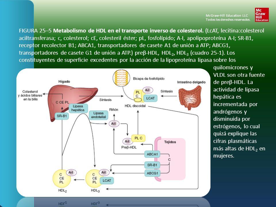 FIGURA 25–5 Metabolismo de HDL en el transporte inverso de colesterol. (LcAT, lecitina:colesterol aciltransferasa; c, colesterol; cE, colesteril éster