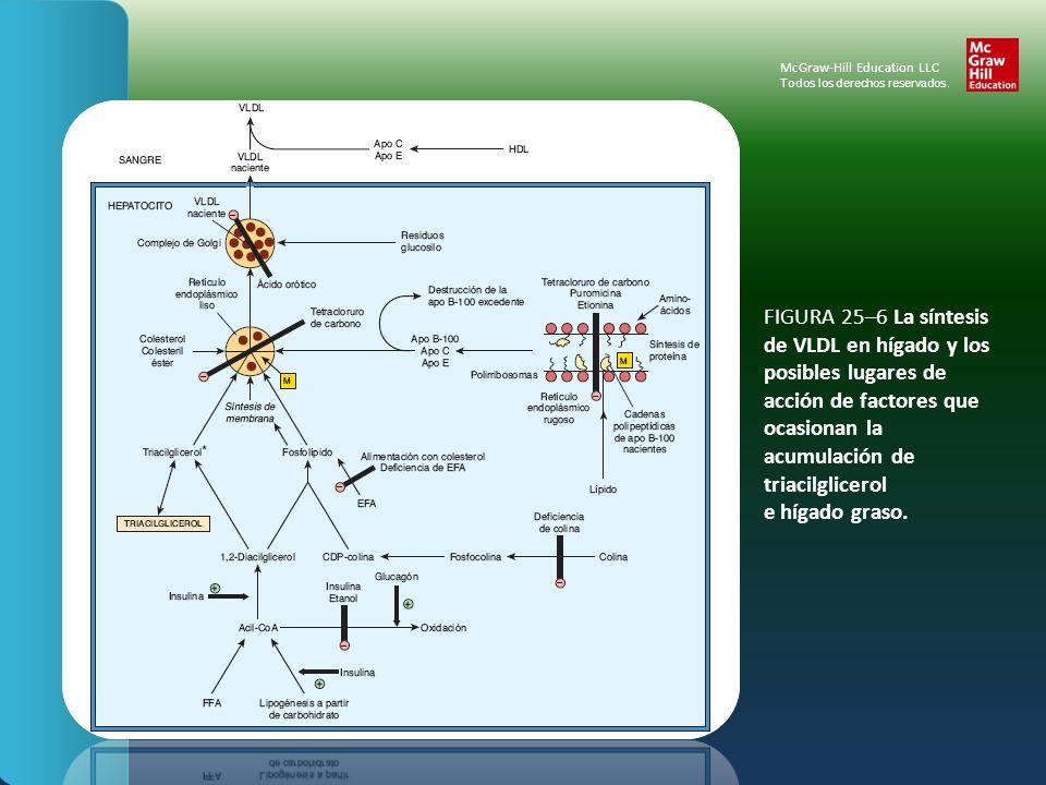 FIGURA 25–7 Metabolismo del triacilglicerol en el tejido adiposo.