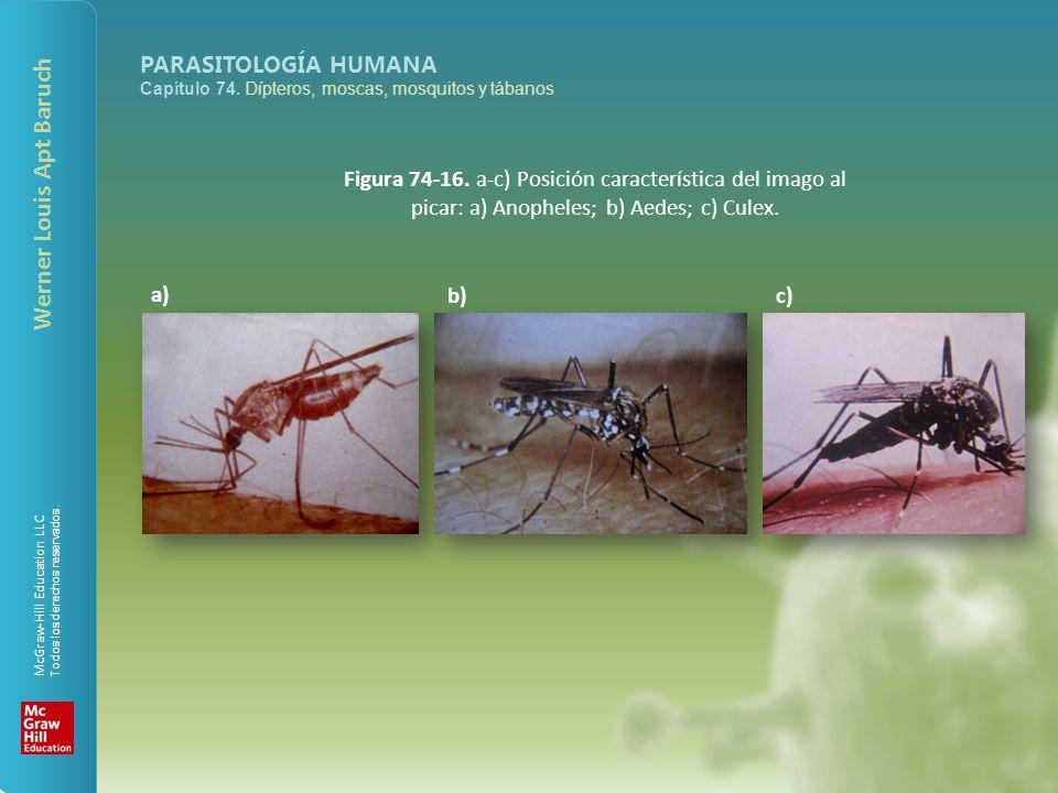 McGraw-Hill Education LLC Todos los derechos reservados. PARASITOLOGÍA HUMANA Capítulo 74. Dípteros, moscas, mosquitos y tábanos Werner Louis Apt Baru