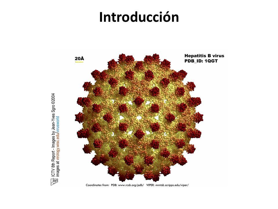 Efecto del VHB en el VIH El VHB no afecta la respuesta al tratamiento antirretroviral: – Supresión del VIH – Incremento de linfocitos CD4 – Pero la mortalidad es más elevada, por enfermedad hepática.