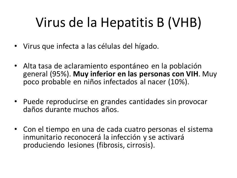 Virus de la Hepatitis B (VHB) Virus que infecta a las células del hígado. Alta tasa de aclaramiento espontáneo en la población general (95%). Muy infe