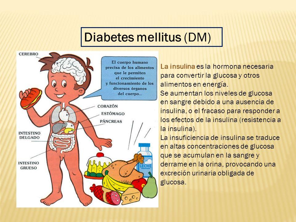La insulina es la hormona necesaria para convertir la glucosa y otros alimentos en energía. Se aumentan los niveles de glucosa en sangre debido a una