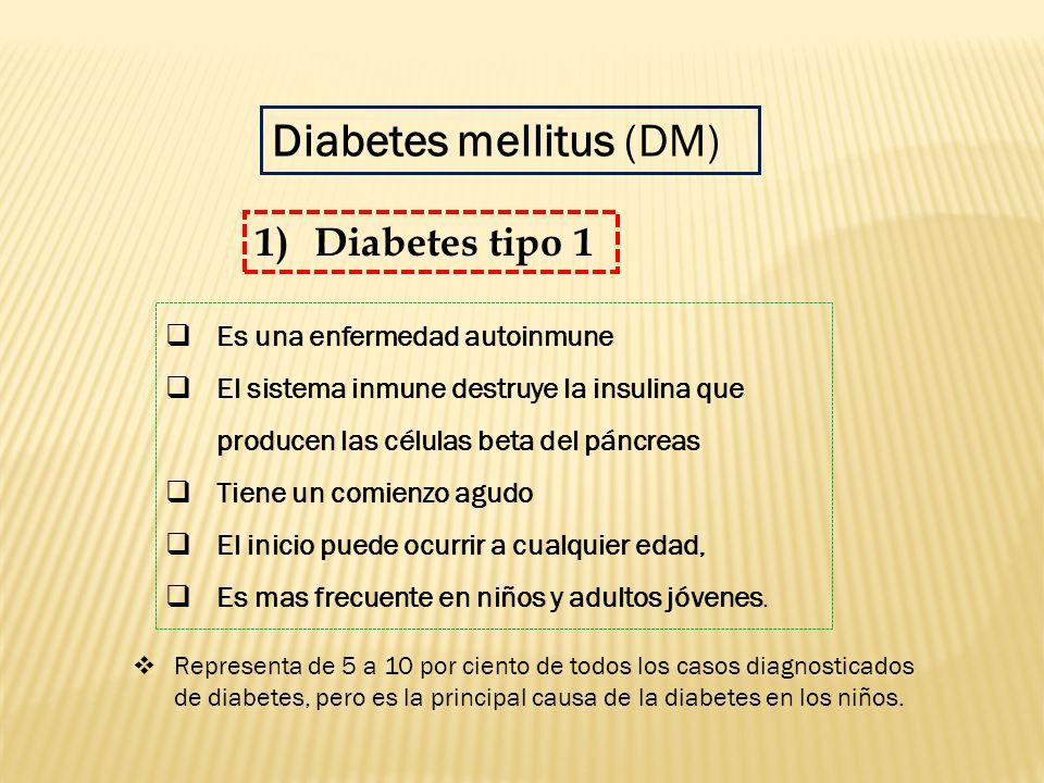 Es una enfermedad autoinmune El sistema inmune destruye la insulina que producen las células beta del páncreas Tiene un comienzo agudo El inicio puede