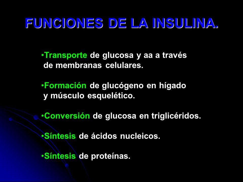 FUNCIONES DE LA INSULINA. Transporte de glucosa y aa a través de membranas celulares. Formación de glucógeno en hígado y músculo esquelético. Conversi