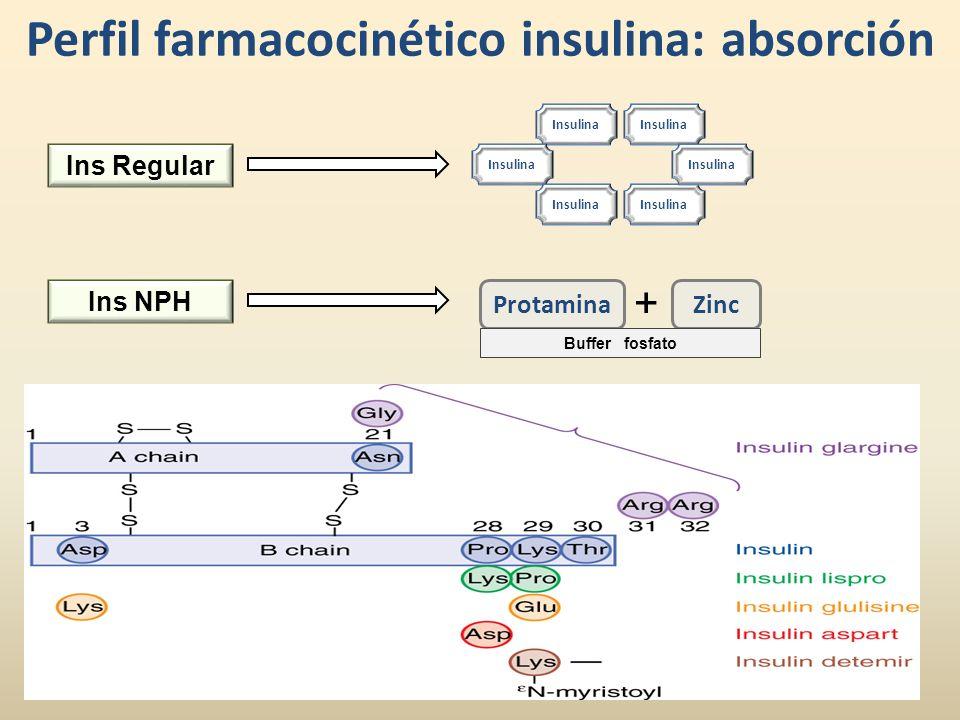Perfil farmacocinético insulina: absorción I nsulina Ins Regular Ins NPH ProtaminaZinc + Buffer fosfato
