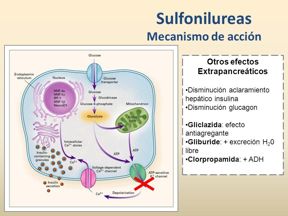 Sulfonilureas Mecanismo de acción Otros efectos Extrapancreáticos Disminución aclaramiento hepático insulina Disminución glucagon Gliclazida: efecto a