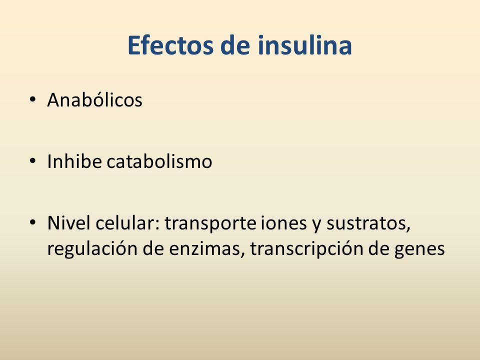 Efectos de insulina Anabólicos Inhibe catabolismo Nivel celular: transporte iones y sustratos, regulación de enzimas, transcripción de genes