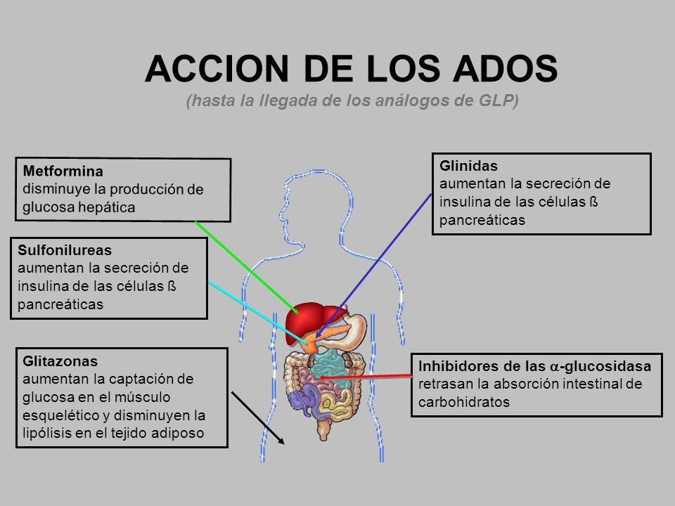 ACCION DE LOS ADOS (hasta la llegada de los análogos de GLP) Inhibidores de las -glucosidasa retrasan la absorción intestinal de carbohidratos Glitazo