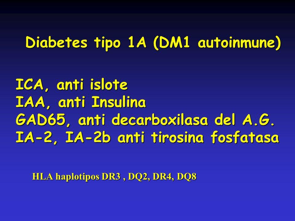 ICA, anti islote IAA, anti Insulina GAD65, anti decarboxilasa del A.G. IA-2, IA-2b anti tirosina fosfatasa Diabetes tipo 1A (DM1 autoinmune) HLA haplo