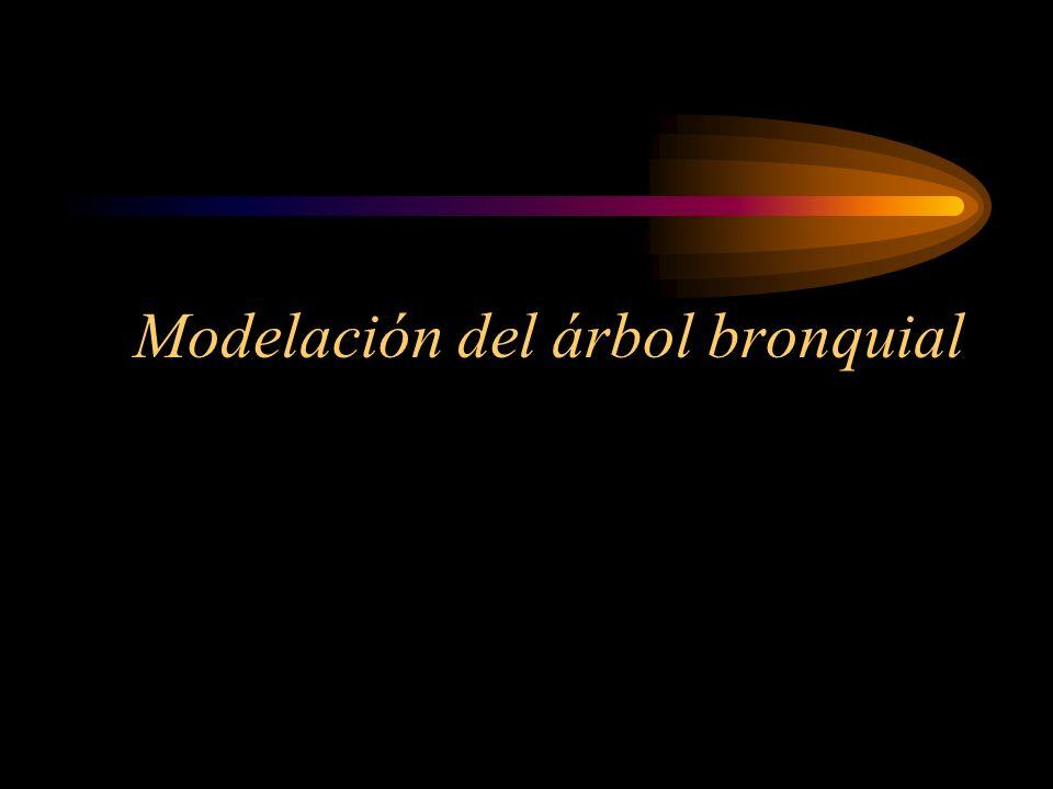 Modelación del árbol bronquial