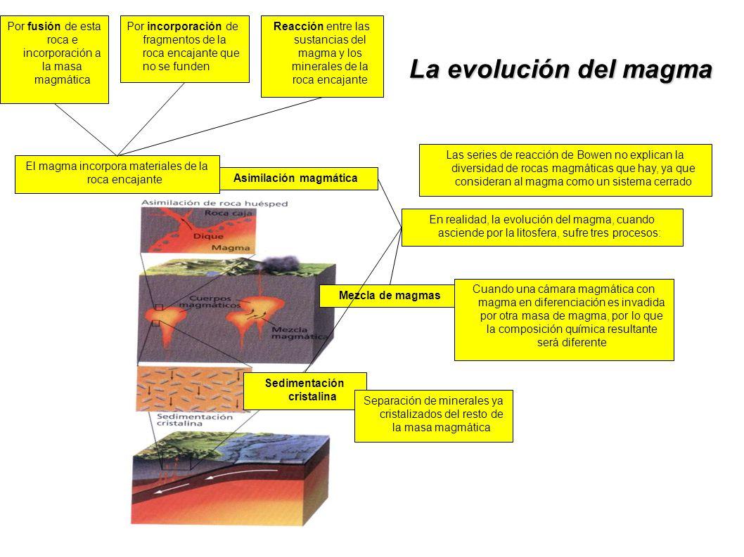 La evolución del magma Las series de reacción de Bowen no explican la diversidad de rocas magmáticas que hay, ya que consideran al magma como un siste