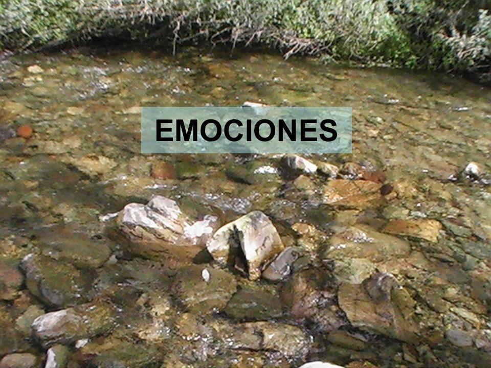14 EMOCIONES