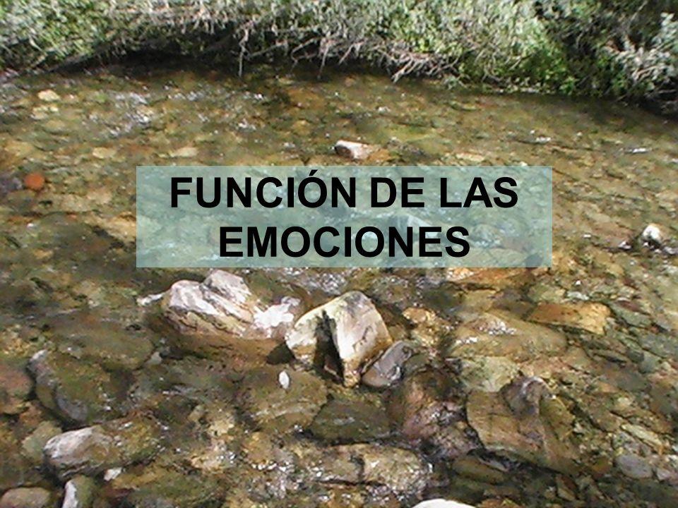 17 FUNCIÓN DE LAS EMOCIONES