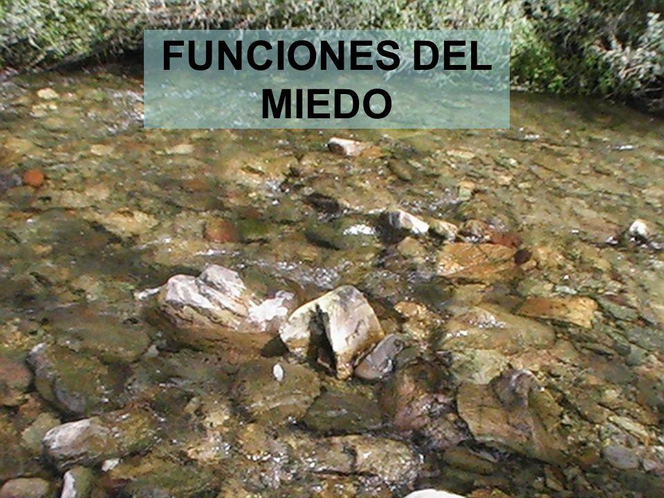 27 FUNCIONES DEL MIEDO