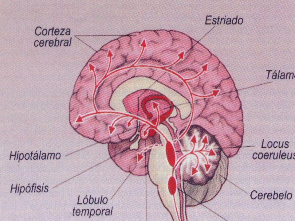 38 RAZÓN Y EMOCIONES La mayor parte del tiempo Ojos, Oídos Tálamo Neocórtex Amígdala En situaciones con mucha carga emocional 1 sinapsis Amígdala (Emoción) 1 sinapsis Amígdala (Emoción) Ojos, Oídos Tálamo Neocórtex (Razón) Neocórtex (Razón)